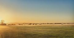 Golden fog (msg_moi) Tags: coromandel newzealand morning sunset farm lansdcape fog roadtrip
