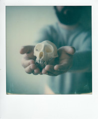 polaroid week (La fille renne) Tags: film lafillerenne analog instantfilm polaroid polaroidweek polaroidsx70alpha sx70 impossibleproject skull hands bokeh osteology