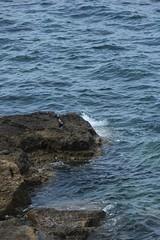 IMG_1211_1 (Pablo Alvarez Corredera) Tags: xixon gijon mar orilla puerto rocas roca zul azules cielo