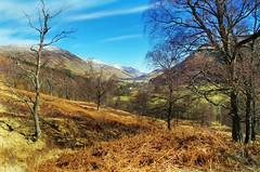 Woodland Walk (eric robb niven) Tags: ericrobbniven scotland glenlyon landscape springwatch
