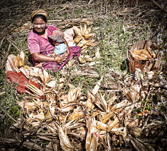 Local farmer's wife and baby working in the corn fields. (Neville Wootton Photography) Tags: babies burma farmers farms holidays kalaw lightroom myanmar onestoptraveltours people topazlabs