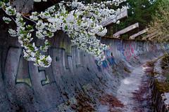 The Old and the New (Rae-J09) Tags: sarajevo bosniaherzegovina bosnia graffiti flowers dof depthoffield bobsled track canon 7d 1635mm bobsleigh abandoned balkans dusk history historic olympic