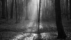 *** (pszcz9) Tags: polska poland przyroda nature natura las forest forestimages pejzaż landscape drzewo tree poranek morning mgła fog mist grudzień december zima winter promień sunray sony a77 bw blackandwhite monochrome czarnobiałe