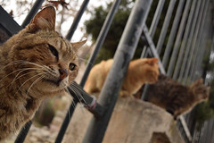 Stray cats in Athens (Nicolay Abril) Tags: athens greece αθηνα ελλάδα athènes grèce athen griechenland atene grecia atina yunanistan atenas