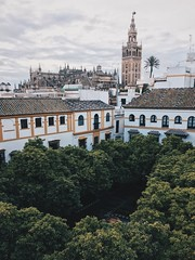 Sevilla. (saul1494) Tags: sevilla españa spain andalucia andalusia europe world city ciudad landmark landscape cathedral architecture arquitectura art bulding sunset sun day night tower clouds new colorful color white vsco vscocam vasco minimal view travel discover