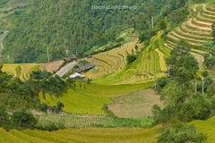 _J5K0032.1011.Chế Cu Nha.Mù Cang Chải.Yên Bái (hoanglongphoto) Tags: asia asian vietnam northvietnam northwestvietnam landscape scenery vietnamlandscape vietnamscenery vietnamscene mountain mountainouslandscape terraces terracedfield terracedfieldsinvietnam harvest hill hillside dale canon canoneos1dsmarkiii canonef85mmf12liiusmlens tâybắc yênbái mùcangchải phongcảnh núi phongcảnhtâybắc đồi sườnđồi thunglũng ruộngbậcthang ruộngbậcthangmùcangchải lúachín mùagặt mùagặtmùcangchải outdoor