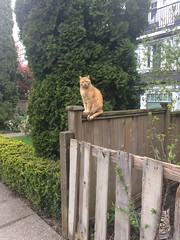 Day 107: Cat on a fence