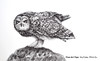 How to Draw an Owl With the Justus 95 Fountain Pen