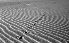 * (Johuhe) Tags: beach coast sand wind waves pattern sea ocean bird feet foot prints track texel holland naterlands dutch leica m2 rigid summicron kodak tmax 100 xtol monochrome black white bw film analog home developed epson v500