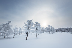 Sun halo (alexander.alechits) Tags: ©alexanderalechits canoneos5dmarkiii canonef1635mmf28liiusm sakhalin nature fog snow morning sun halo сахалин снег зима гало солнце