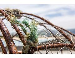 A Little Green Around The Gills (red stilletto) Tags: apollobay apollobayvictoria apollobaybeach apollobaypier apollobaymarina craypot rope rust rusted rusty wire