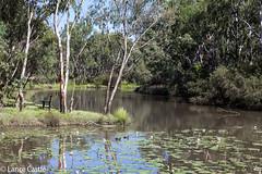 Charley's Creek, Chinchilla 4413. (Lance CASTLE) Tags: discoverchinchilla chinchillaqueensland australia water creek trees plants fence nature waterlife explore country australian look coverhillranchoutdooreducation charleyscreekchinchilla green flyr scene australianphotography 4413 darlingdownes