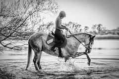 Horse2 (donomar80) Tags: pferd hors reiter rider jockey nature water fun spass natur wasser fluss river splash spritzer white weiss schwarz black blackandwhite bw noire romantic tag day daylight