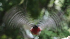Great Contest ! Guess what you're looking at !!! (carlo612001) Tags: contest greatcontest prize prizes slowmotion bside wonderful answer win picchio picchiorossomaggiore woodpecker redwoodpecker wings flaying birds bird nature natura