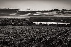 Helford sunset.... (AJFpicturestore) Tags: helfordriver sunset afterglow helford thelizard cornwall cornishscenery cornishviews monochrome alanfoster