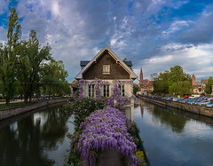 Square des Moulins... [Strasbourg, France - 2017] (Jose Constantino Gallery) Tags: city ville place building public night 2017 jose constantino joséconstantino strasbourg france sky flowers purple flower cannale channel water river