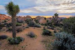 Mojave Desert Sunrise (jthight) Tags: ca rock usa landscape desert naturallight nationalpark joshuatree photoshop rocks nikond810 california mojavedesert zse march sunshine afzoom2470mmf28g clouds joshuatreenationalpark sky sunrise unitedstates morning lightroom landform twentyninepalms us