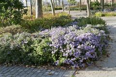 _DSF0044 Battery flowers (CoriJae) Tags: batterypark hdr broadway downtownmanhattan newyork