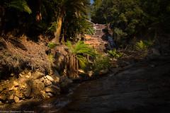 Westmorland Falls (Andrew Shepherd) Tags: westmorelandfalls d610 lightroom nikon tasmania day landscape outdoor rainforest trees greatwesterntiers waterfall