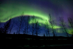 042017 - Spring Aurora over the still leafless trees (Nathan A) Tags: alaska ak fairbanks salcha northstar river spring cold ice snow night aurora auroraborealis northernlights nightsky stars farnorth geomagnetic green nature outdoors beauty skygazing