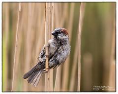 ARKLOW DUCK POND 2017 (philipmaeve12) Tags: select birds wildlife arklow duck pond