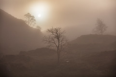 Misty Sun, Holme Fell, Lake District (MelvinNicholsonPhotography) Tags: holmefell lakedistrict cumbria misty sun trees tarn fells atmospheric gitzo manfrotto canonuk leefilters landscapephotographyworkshops melvinnicholsonphotography