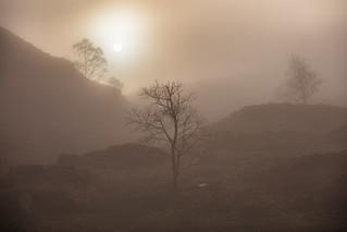 Misty Sun, Holme Fell, Lake District