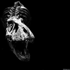 Roaaaar (Erik Schepers) Tags: museum dino dinosaur tyrannosaurus trix rex skeleton musea leiden naturalis bite hap teeth nederland holland scary nature fossil bones science