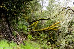 Monte Bello-16 (MohamedMM) Tags: hike montebello palo alto california nature mountains green