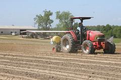 Peanut Planting 9 (UGA College of Ag & Environmental Sciences - OCCS) Tags: uga tifton campus peanuts planting