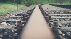 railway. (maxgrosser) Tags: sony a6000 minolta af 50mm schienen railway stahl steel trasse bahn natur