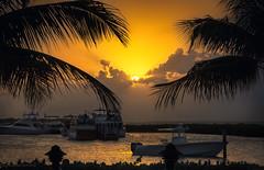 Sunset Florida Keys (JesseMichaelMarshall) Tags: sunset sunsets floridakeys sony a7rii fe70300 island ocean palm trees islamorada islandlife