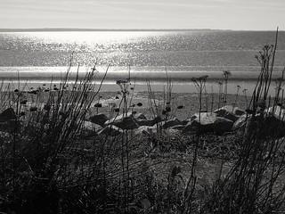 The beach in B&W...
