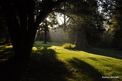 In the early morning light. (mcgrath.dominic) Tags: rhododendrons trees botanicgardens kilmacurragh cowicklow