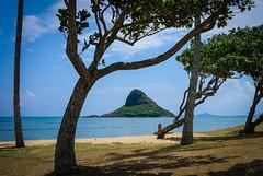 The hat through the trees (kimbar/Thanks for 2.5 million views!) Tags: beach chinamanshat hawaii island oahu ocean pacific shore trees