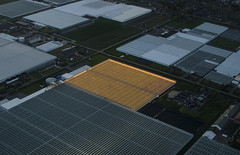 337 - Airview Greenhouses (kosmekosme) Tags: greenhouse greenhouses farming farm modernfarming sky light electricity view air airview road houses house car cars glass raise cultivate grow artificial vegetable vegetables greenhouseeffect agriculture hothouse transparent dutch holland airplane airplaneview plant plants climate flower flowers netherlands thenetherlands cucumber cucumbers largescale upscale