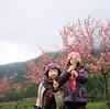 Blowing dandelion (Jeanhom Chen) Tags: rolleiflex rolleiflex28f kodakportra160 120rollfilm film 武陵農場