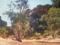 the Outback Outside of Alice Springs (pdw's atelier) Tags: portrait mountains fern water smile kids forest painting children stream artist child view desert sheep scenic australia melbourne victoria brush hike trail kangaroo laugh lamb vista flindersstreetstation dining outback collinsstreet flindersstreet downunder stkildaroad graze warrandyte atelier alicesprings ayersrock dandenongs swanstonstreet kangarooground