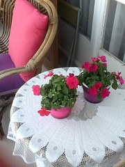 Pink petunias (eltpics) Tags: pink flowers plants white embroidery petunia tablecloth cushion eltpics