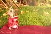 50/10 (Alaa rashid | آلاء) Tags: pink nature canon drink cocktail splash cade alaa d600 طبيعة وردي اخضر كوكتيل آلاء مشروب كاديه سبلاش