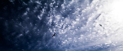 Seagulls in the Sky (December-Skies) Tags: sky cloud lumix seagull panasonic f25 14mm gx1