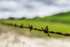 Barbs and Bokeh (Photos by Christopher Percy) Tags: beautiful fence bokeh farm stock barbedwire getty imagine pastures barb stockphotography smoothbokeh