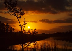 Golden Sunrise at The Hungryland (tclaud2002) Tags: sunrise golden florida martincounty joneshungryland