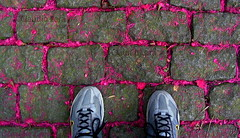 SELFEET num REJUNTE DE POESIA - Parque Lage - Rio de Janeiro  #CLAUDIOperambulando (¨ ♪ Claudio Lara - FOTÓGRAFO) Tags: nike adidas runclub reebok mizuno claudiolara nikerio brasll brazll cláudiolara claudiol jardimbotânicobyclaudio rlodejaneiro rlodejanelro adidasémaiselegante mizunoémelhor runningshoebyclaudio