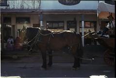 Original Horse Power (c_kreature) Tags: leica arizona southwest desert streetphotography rangefinder az 35mmfilm m6 leicam6 scannednegative filmphotography c41process colornegative filmsnotdead filmwins 35mmfilmphotography believeinfilm buyfilmnotmegapixels francodesoto konicacenturia400s