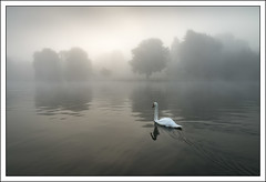 Sailing to the dawn (mistymornings99) Tags: england mist water weather thames river landscape unitedkingdom swans marlow refelection photostyles wycombedistrict
