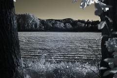 IMG_3064 (Dan Correia) Tags: amherst dof church infrared nikon 75150mmf35e 15fav topv111 topv333 topv555 topv777 topv999