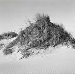 Hillock, Oregon Coast (austin granger) Tags: film grass oregon square coast wind dunes hill mound hillock hummock gf670 austingranger