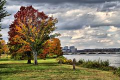The Colors of Autumn - Series (Bernai Velarde-Light Seeker) Tags: autumn usa tree rio canon river arbol dc washington vermont trail potomac otoo eos6d bernaivelarde