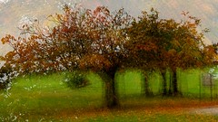 Autumn in Memorial (wetbicycleclappersoup) Tags: icm intentionalcameramovement